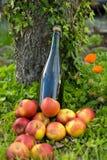 Bouteille de cidre de la Normandie avec des pommes dans l'herbe, Image stock
