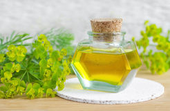Bouteille de cyparissias d'euphorbe, extrait de spurge de cyprès (teinture de Milkweed, infusion, huile de fines herbes) photos libres de droits