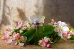 Bouteille de parfum avec des branches de fleur de ressort photo stock