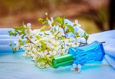 Bouteille de parfum en verre bleue et branche de floraison de cerise Image libre de droits