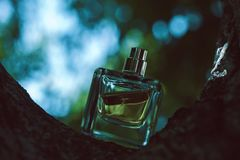 Bouteille de parfum normale Photographie stock libre de droits