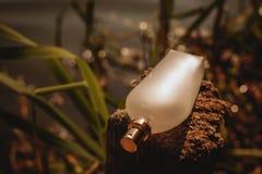 Bouteille de parfum normale Images stock