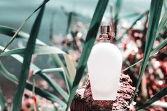Bouteille de parfum normale Image stock