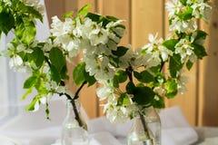 Bouteille en verre avec les branches se développantes de la cerise, pommier photographie stock libre de droits