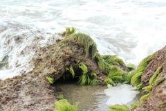 Bouteille et la mer Image libre de droits