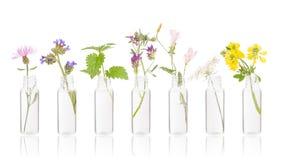 Bouteilles d'huile essentielle avec les herbes fraîches images stock