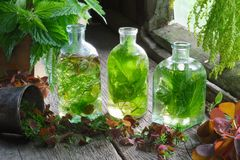 Bouteilles et fioles de la teinture ou de l'infusion des herbes curatives, de l'ortie et des herbes médicinales sur la table en b images stock