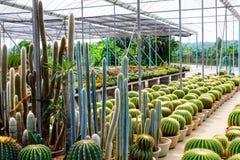 Boutique d'arbre de cactus avec l'élevage dans la maison à vendre Photos libres de droits
