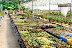 Boutique d'arbre de cactus avec l'élevage dans la maison à vendre Images libres de droits