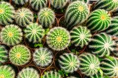 Boutique d'arbre de cactus avec l'élevage dans la maison à vendre Photo libre de droits