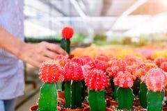Boutique d'arbre de cactus avec l'élevage dans la maison à vendre Photo stock