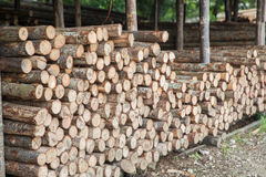 Boutique en bois d'identifiez-vous image stock