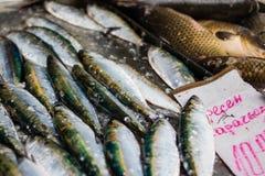Boutique pour des poissons en Bulgarie Images stock