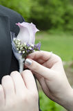 Boutonnière Royalty Free Stock Images