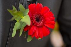 Boutonniere des Bräutigams mit rotem Gerbera Lizenzfreies Stockbild