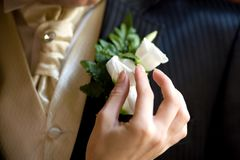 Boutonniere on a jacket stock image