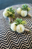 Boutonniere for groom and groomsman Royalty Free Stock Images