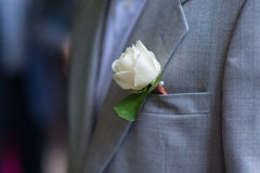 Boutonniere groom made of white rose Royalty Free Stock Image