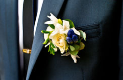 Boutonniere for the groom Stock Image