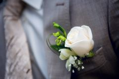 Boutonniere on a man's jacket Royalty Free Stock Photography