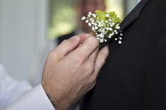 A boutonniere is put on a groom Royalty Free Stock Photography