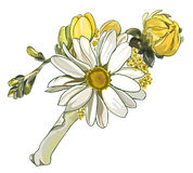 Boutonniere with white chrysanthemum. Illustration Royalty Free Stock Image