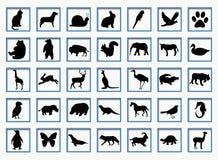 Boutons avec des animaux Photos libres de droits