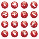 Boutons de rongeur et de parasite Photo libre de droits