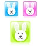 Boutons lustrés de lapin Photographie stock
