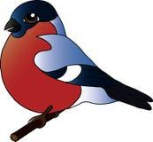 Bouvreuil, oiseau, hiver, rose Photo libre de droits
