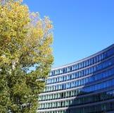 Bouw de herfst blauwe hemel van het boomzonlicht stock afbeeldingen