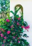 Bouw groene palminstallatie Stock Afbeelding