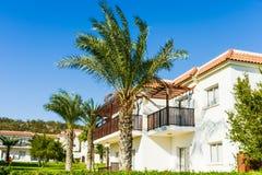 Bouw groene palminstallatie Stock Afbeeldingen