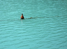 Bouy在水中 库存图片