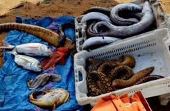 Bouznika (plage de la côte atlantique du Maroc) Image stock