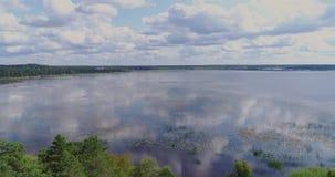Bove di volo del fuco del lago pine, paesaggio, natura, antenna, foresta, blu, pino, fondo, bello video d archivio