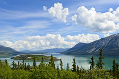 Bove Island et lac Tagish Photo stock