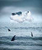 Boven haaien Royalty-vrije Stock Afbeeldingen