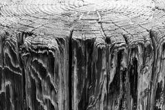 Boven mening van boomringen en zijaanzicht van doorstane houten pijler, een achtergrond uitstekende grungetextuur van langzaam ve royalty-vrije stock foto's