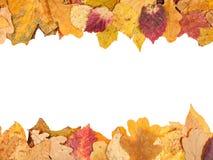 Bovenkant en bodemkaders van gevallen de herfstbladeren Royalty-vrije Stock Foto