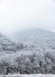 Bovenkant van bergen met snow-covered pijnboombos worden behandeld in de mist die Stock Foto's