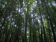 Bovenkant van bomen Stock Foto