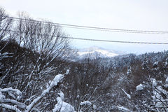 Bovenkant van bos in de winter Royalty-vrije Stock Foto's