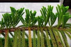 Bovenkant van de bladeren stock fotografie