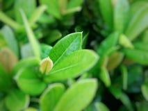 Bovenkant van de boom of de jonge bladeren Royalty-vrije Stock Foto