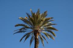 Bovenkant van een palm Royalty-vrije Stock Fotografie
