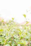 Bovenkant van groene grasachtergrond Stock Fotografie