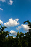 Bovenkant van hoge boom in het park, mooie zonnige dag Stock Afbeeldingen
