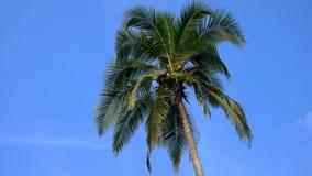 Bovenkant van kokosnotenpalm met blauwe hemelachtergrond