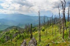 Bovenkant van Kokuya-Berg Altairepubliek Rusland Stock Afbeelding